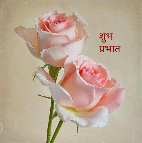 nehaparikh161936044610377_22022018175842