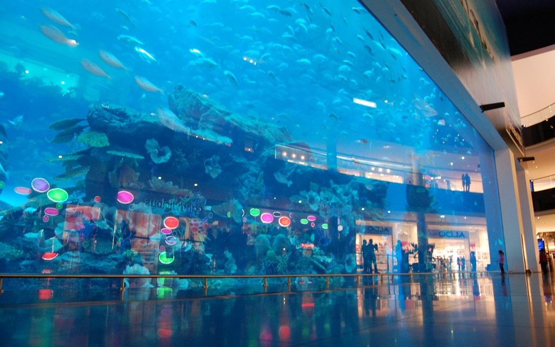 Dubai Aquarium And Underwater Zoo Review