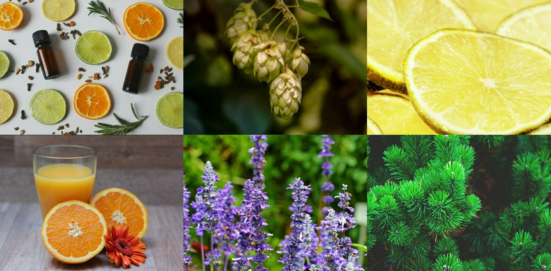 Terpenes Natural Products